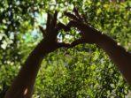 nature aimer protéger : Journée mondiale de prière pour la sauvegarde de la Création 2020